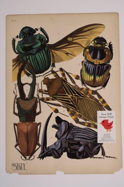 Seguy Rhinocerous Beetles Pochoir-15, available, for sale, original pochoir plate.