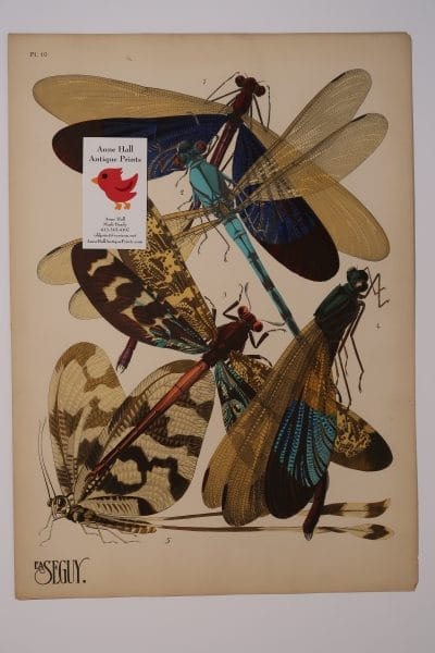 EA Seguy dragonflies-10 from Insectes portfolio, an original pochoir plate from 1925 to 1926.