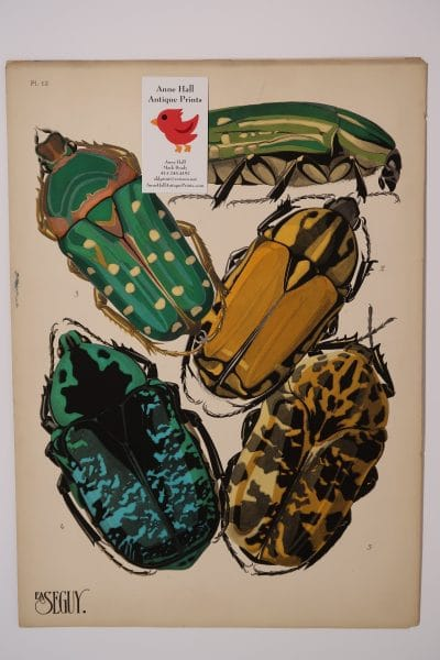 Spectacular beetle design, an original French Art Deco pochoir plate 12 from Insectes, E.A. Seguy insectes Papillons Beetles-12