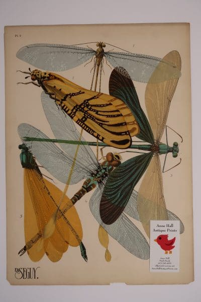 Pehaps the most stunning of Seguys Pochoirs Dragonflies Insectes-9, is this plate of 5 species of dragonflies, with incredible details in the insects wings.