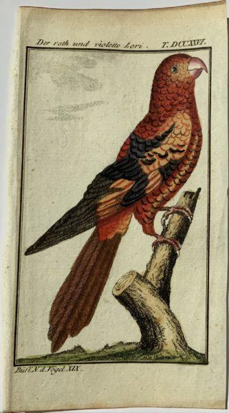 Buffon Parrot 7