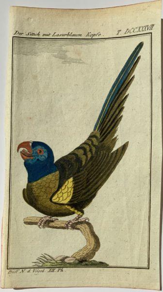 Buffon Parrot 9