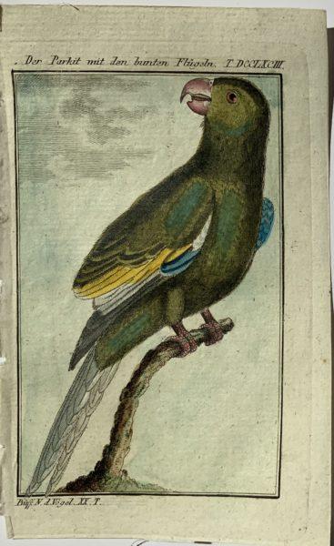 Buffon Parrot 2
