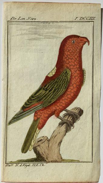 Buffon Parrot 8