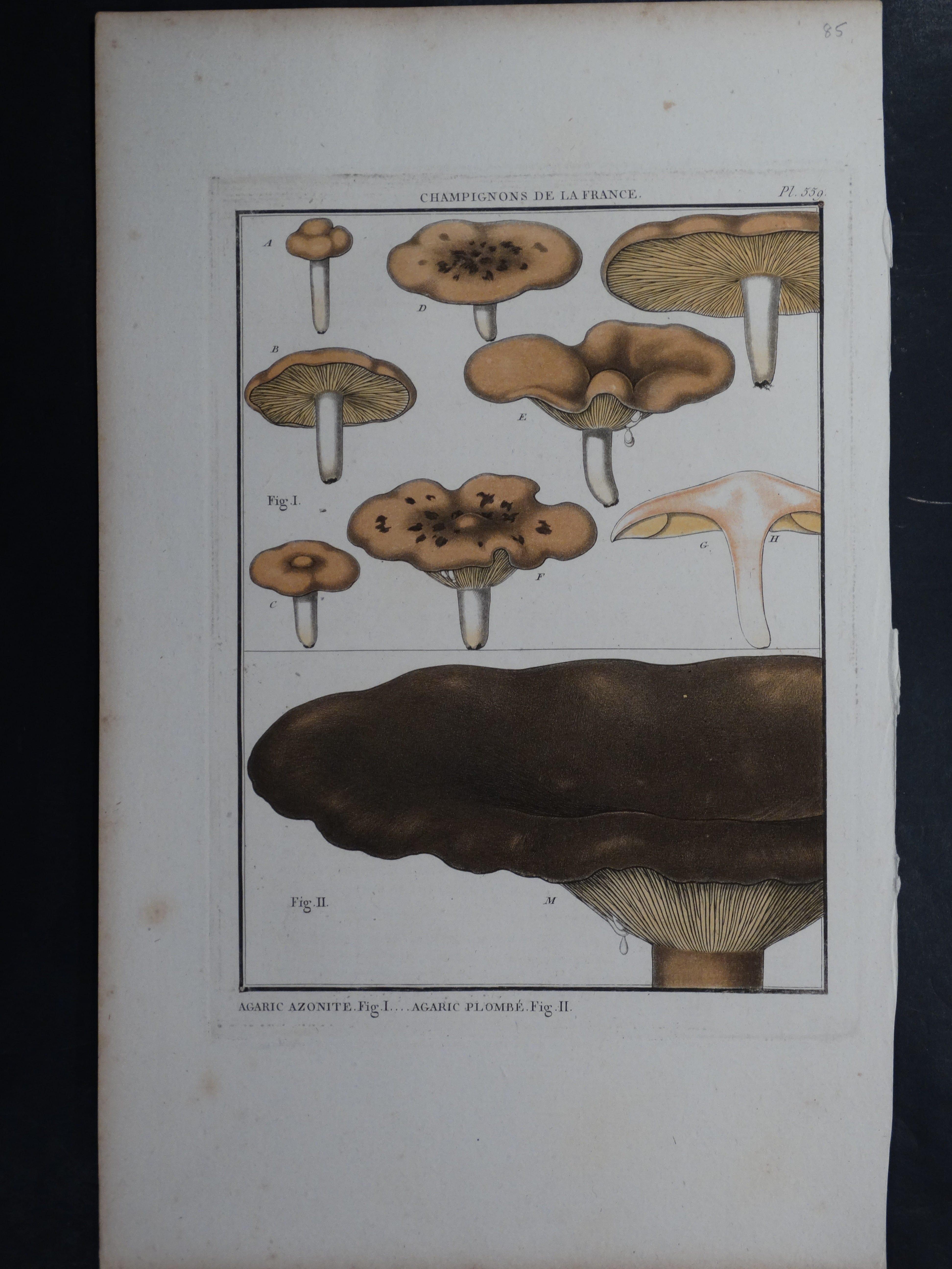 Agaric Azonite Mushroom $85