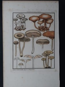 Agaric Hydrogramme Mushrooms $85