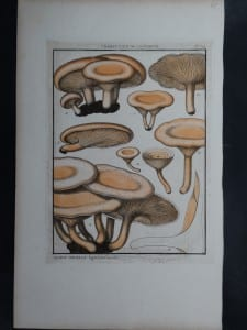 Agaric Orcelle Mushrooms $85