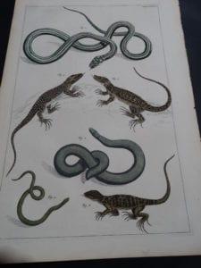 Albertus Seba Lizards and Snakes Pl. LXXXVI