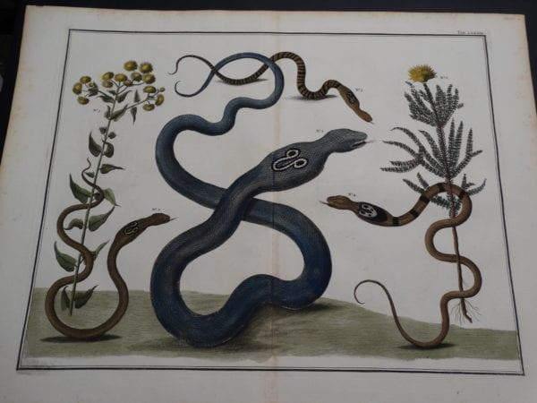 Albertus Seba Strange Critters Pl. LXXXIX