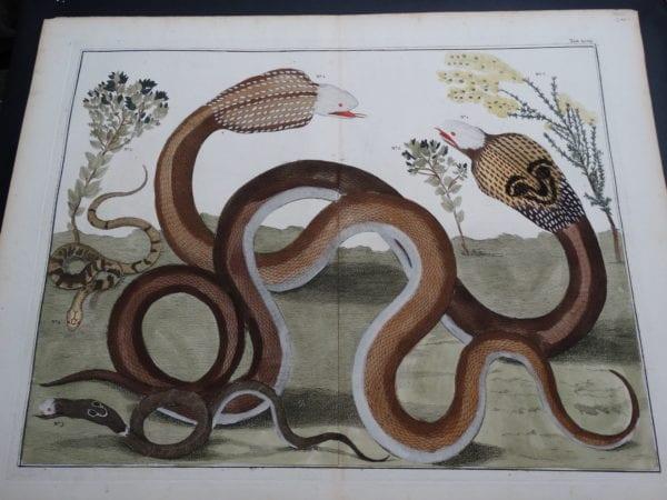 Albertus Seba Strange Critters Pl. XCVII