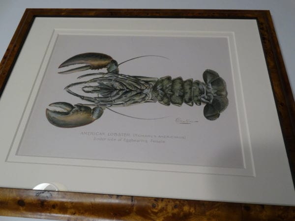 American Lobster Homarus Americanus by Denton Female Egger sold with the male, as a pair with exquisite archival framing complete with description on verso.