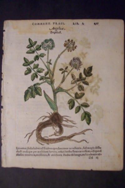 Angelica, 1560. $60.