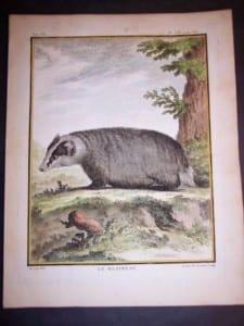 Animal Buffon Badger 480