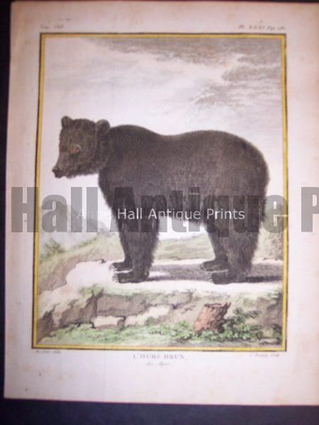 Animal Buffon Bear 468