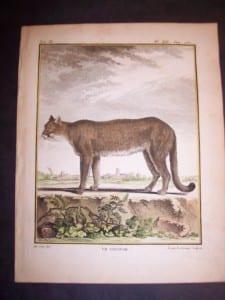 Animal Buffon Cougar 464