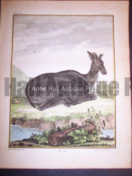 Animal Buffon Elan 485