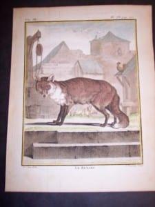 Animal Buffon Fox 466
