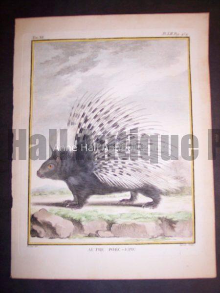 Animal Buffon Porcupine 477