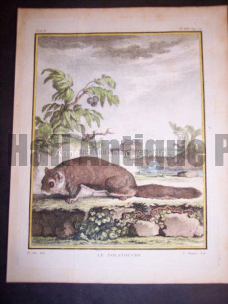 Animal Buffon Squirrel 470