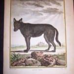 Animal Buffon Wolf 467  125.