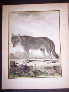 Animal Buffon Wolf 469