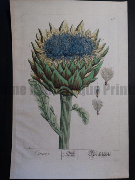 artichoke original watercolor