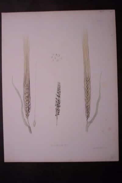 Barley, 1849. $20.