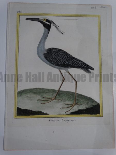 Original 18th century Francois Martinet birds engraving from Histoire Naturelle des Oiseaux of Yellow Crowned Night Heron.