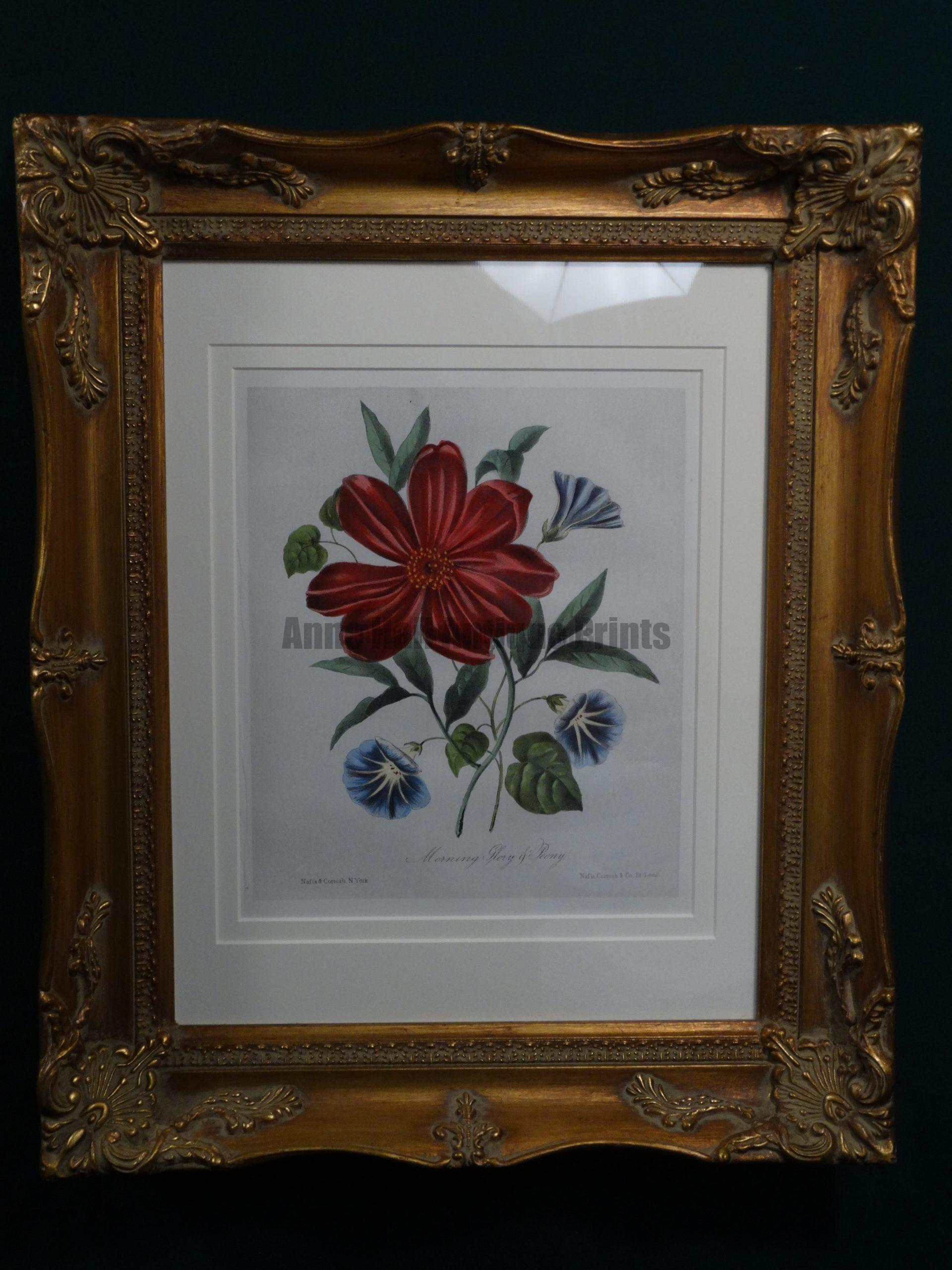 Rare American watercolor lithograph with red paeony and blue morning glory. Published for The Fairy Bower in 1846.