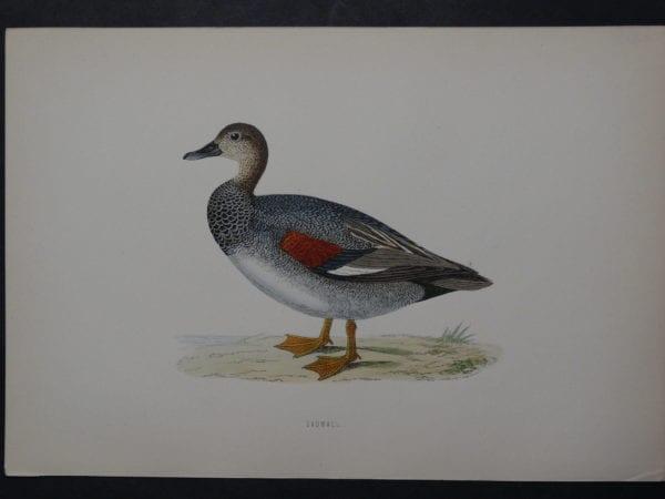 Cadwall, 1890. $45.