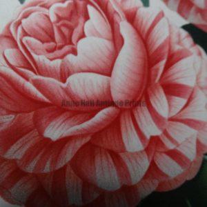 Camellias family Theaceae genus Camellia