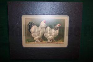 Chicken Chromolithograph Framed, Slate