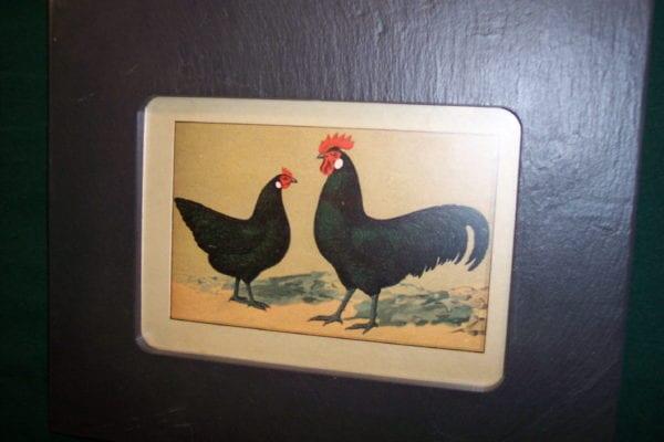 Chicken Chromolithograph Framed, in Slate