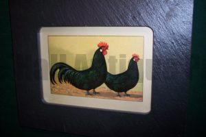 Chicken Chromolithograph Framed, Vermont Slate