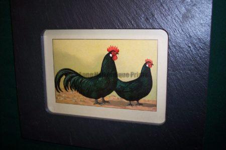 Chicken Chromolithograph Framed, Vermont Slate