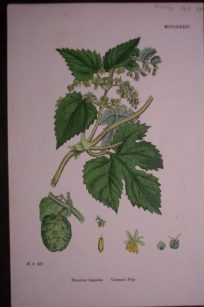Common Hop, 1863. $35.