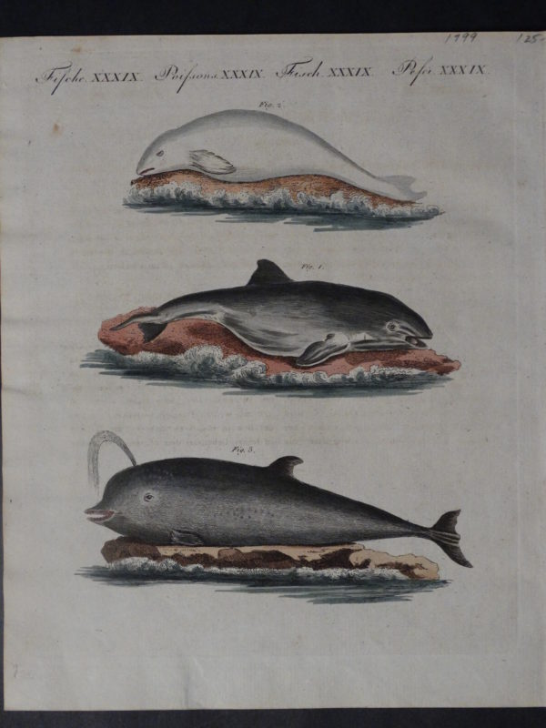 Untitled Whales(7), 1799. $125.