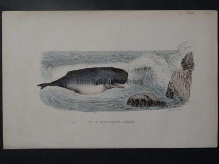 spouting whale ocean surf