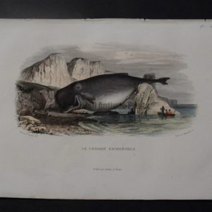 Travies antique prints whale