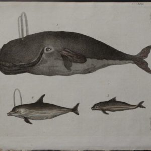 Untitled Whales, c.1800. $150.