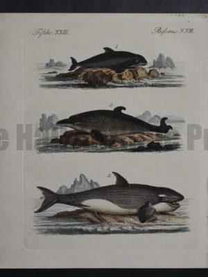 Untitled Whales(1), 1799. $150.