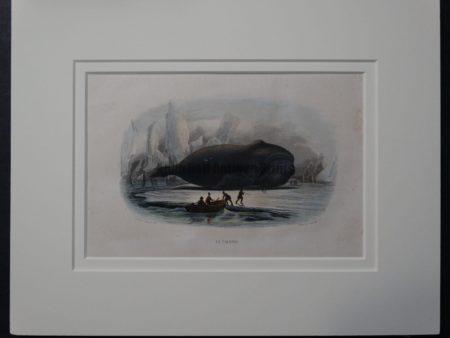 La Baleine, 1854. $165.