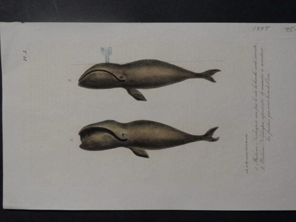 Untitled Whales(4), 1835. $95.