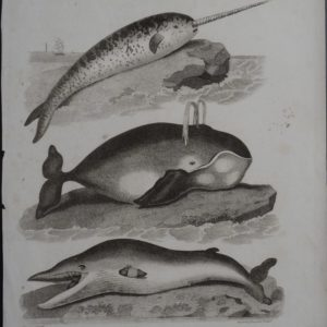 Untitled Whales(5), 1800. $150.