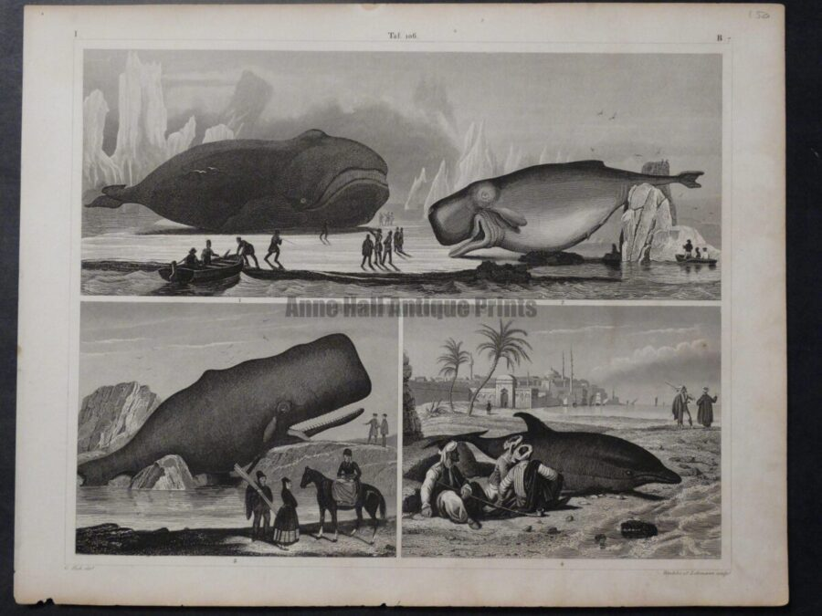 3 whale scenes old engraving