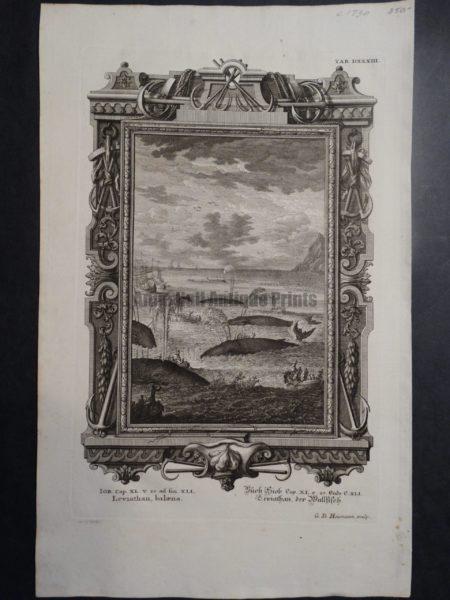 Leviathan, Balaena, c.1730. $350.