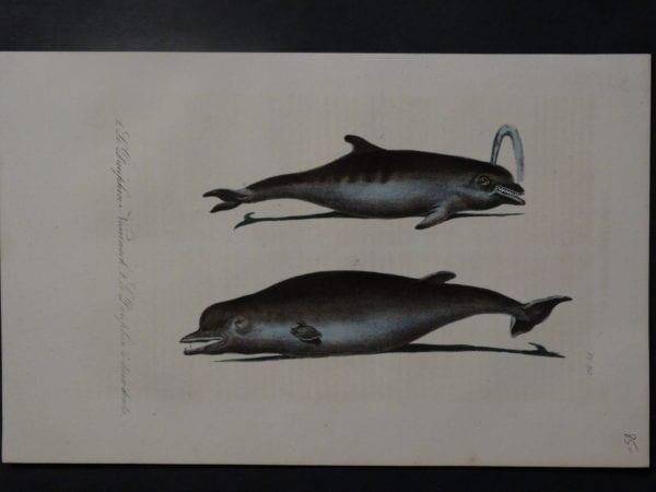Le Daufhine Nesarnack, 1835. $85.