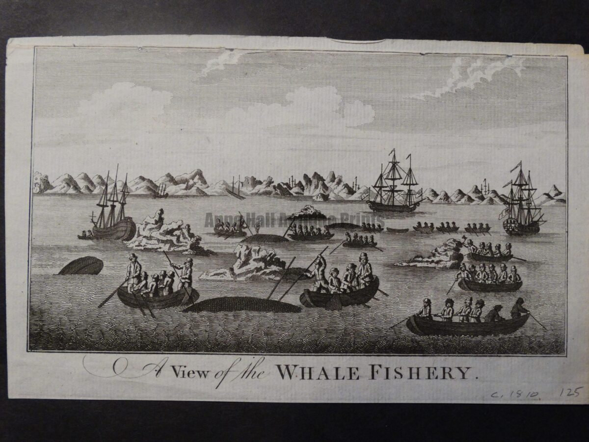 A historic 200 year old engraving of 3 whaling ships, 14 whaleboats , hunting a pod of 3.