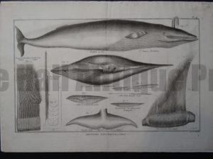 Histoire Naturelle, c.1749-61. $350.