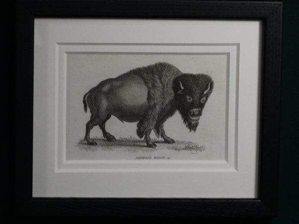 American buffalo engraving that is 220 years old.